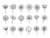 Dandelion Set. Doodle Hand Drawn Dandelions Monstera Delicate Plant Seeds Summer Botanical Fluff Flo poster