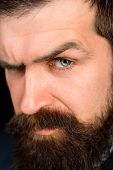 Closeup Portrait Of Confident Bearded Man. Portrait Of Brutal Bearded Man. Solid Man With Beard And  poster