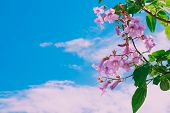 Beautiful Summer Flowers And Sky Background In Summer Season. Colorful Flowers Of Trees In Summer Pa poster
