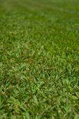 Freshly Trimmed Lawn