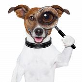 image of goofy  - dog with a magnifying glass and searching - JPG