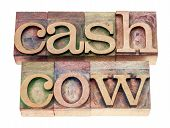cash cow - isolated text in vintage letterpress wood type blocks stained by color inks