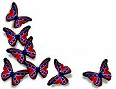 pic of rebel flag  - Confederate Rebel flag butterflies isolated on white background - JPG