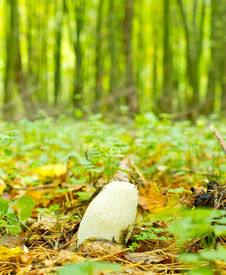 stock photo of phallus  - Young mushroom  - JPG