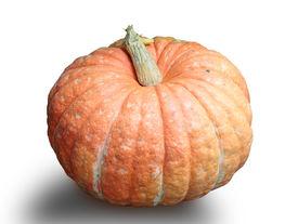 stock photo of cucurbitaceous  - big orange pumpkin on a white background - JPG