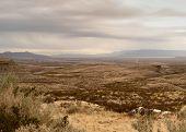 Texas Southwest Plains