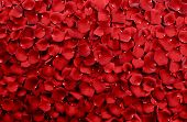 stock photo of plant species  - Red Rose Petals Background  - JPG