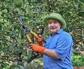 Senior Woman Works In Garden