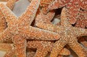 Starfish Closeup