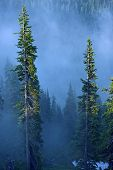 stock photo of olympic mountains  - Fog in Forest - JPG