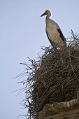Stork on a Bell Tower of a church in Mengibar Jaen province Andalusia Spain