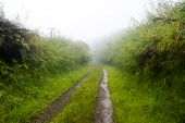 A remote, countryside dirt road lined with green foliage during a foggy, rainy wet day