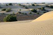 Beautiful Dunes Of Thar Desert During Sunrise,rajasthan,india,south Asia