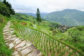Stone pathway in longshen rice terraces