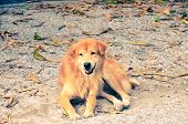 stock photo of fallen  - Homeless smiling dog lied on the ground with fallen leaves