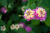 Colorful Blooming Flowers
