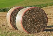 Two Hay Bales In The Field