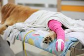 pic of veterinary surgery  - Golden retriever recovering with pink bandage After Veterinary Surgery - JPG