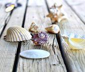 Collection Of Seashells.