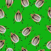 Colorado Potato Beetles Seamless Pattern