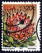 Postage Stamp South Africa 1977 Queen Sugarbush, Flowering Plant