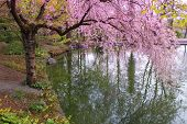 Romantic Japanese Garden