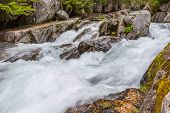 Rapids on the Paradise River Mt. Rainier National Park Washington