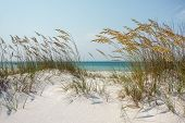 stock photo of dune grass  - View through sparkling white sand dunes and mature golden sea oats to the blue green ocean - JPG