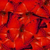 Many Of Red Butterflies In Full Framing Mixed As The Great Background Texture