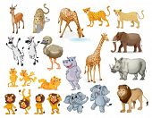 Illustration of many wild animals