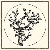 Illustration Of A Coral