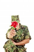 Soldier In Camouflage Uniform Kneeling Holding Flower