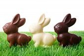 Easter Rabbits