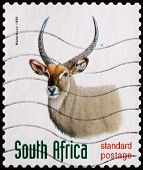 Postage Stamp South Africa 1998 Waterbuck, Antelope