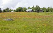 Midsummer on the farmland.