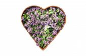 Wild Marjoram Oregano Medical And Spices Flowers In Heart Form Basket