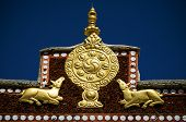 stock photo of dharma  - Wheel of Dharma and golden deers in monastery  - JPG