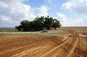 Rural Isrsael