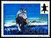 Vintage  Postage Stamp. Wolf.