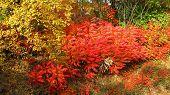 colorful bushes