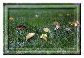 Autumn In Krivoy Rog