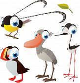vector isolated cartoon cute animals set: birds: bird of paradise, spoonbill, puffin, stilt