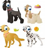 vector isolated cartoon cute animals set: dog breeds: kerry blue terrier, cocker spaniel, golden retriever, dalmatian