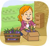 Illustration of a Woman Arranging Eggplants in a Box