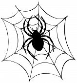 image of spider web  - Silhouette of spider in web  - JPG