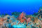 Colorful hard and soft corals on a deep reef