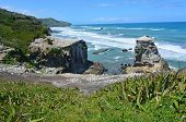 image of gannet  - Muriwai gannet colony in Muriwai Regional Park New Zealand - JPG