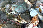 stock photo of cooked blue crab  - fresh crab in the market for cooking