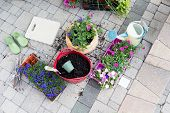 image of pot plant  - Nursery seedlings potting soil and flowerpots with newly planted flowers standing on a brick patio with trays of plants waiting to be transplanted in a gardening and home enhancement concept - JPG