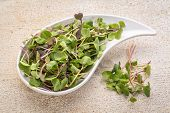 stock photo of kale  - organic micro greens  - JPG